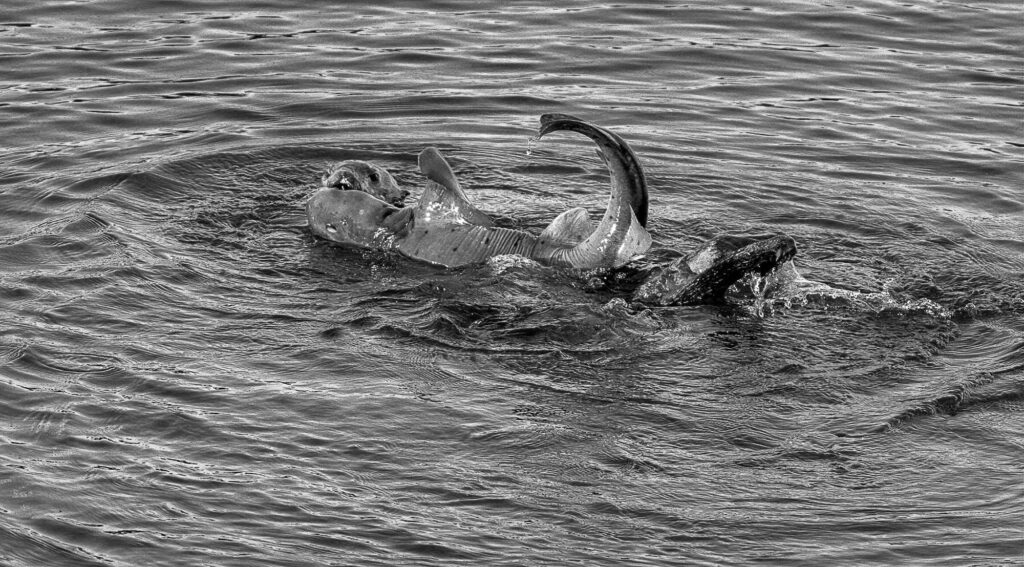 Credit: Don Henderson, Sea Otter Savvy/Newsflash