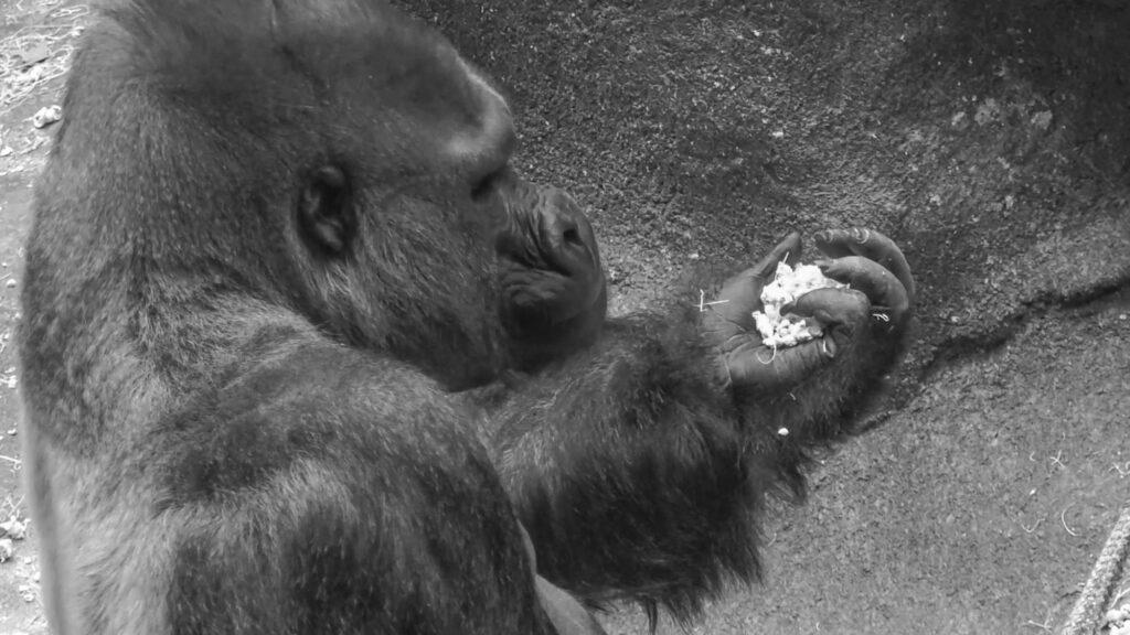 Credit: Lynette Kleisner, Chicago Zoological Society/Newsflash