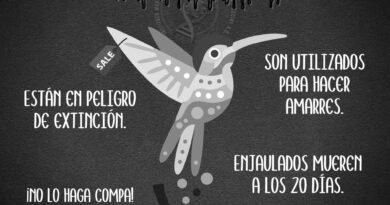 Credit: @InstitutoMexicanoFaunaFloraYSustentabilidadSocial/Newsflash
