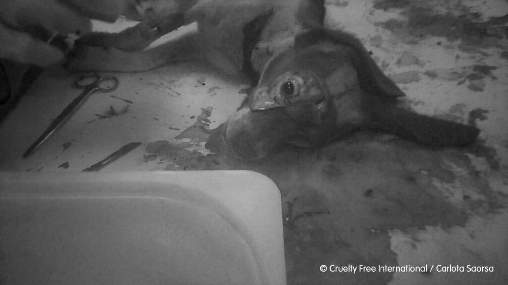 Credit: Carlota Saorsa-Cruelty Free International/Real Press