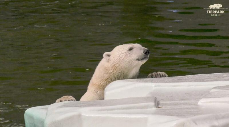 Credit: Tierpark Berlin/Newsflash