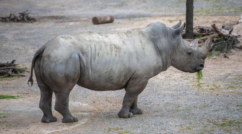 Credit: Zoo Zurich, Pascal Marty/Newsflash