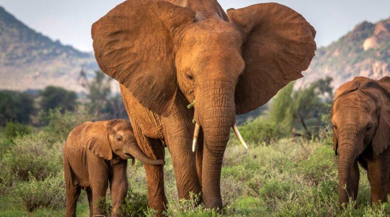 Credit: Robbie Labanowski, Save The Elephants/Newsflash