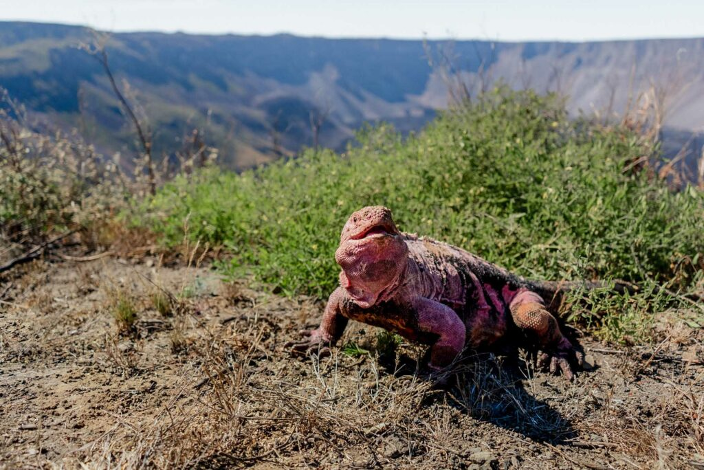 Credit: Joshua Vela Galapagos Conservancy/Newsflash