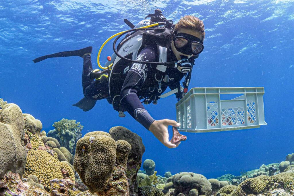 Credit: Reef Patrol/Newsflash