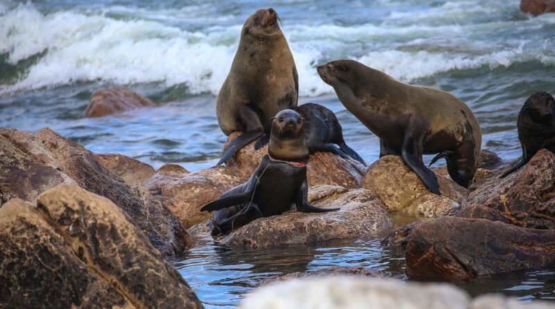 Credit: Sea Search Namibian Dolphin Project Naude Dreyer/Newsflash