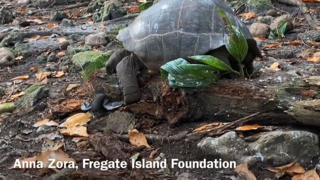 Credit: Anna Zora, Justin Gerlach, Fregate Island/Newsflash