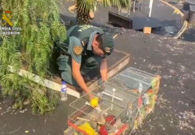 Cops Save 150 Tropical Birds In House Evacuated During La Palma Volcano Eruption
