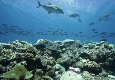Decade Long Survey Finds Climate Change Is Pushing Isolate Reefs To Brink Of Collapse