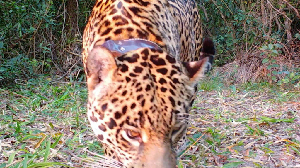 Credit: Fundacion Rewilding Argentina/Newsflash
