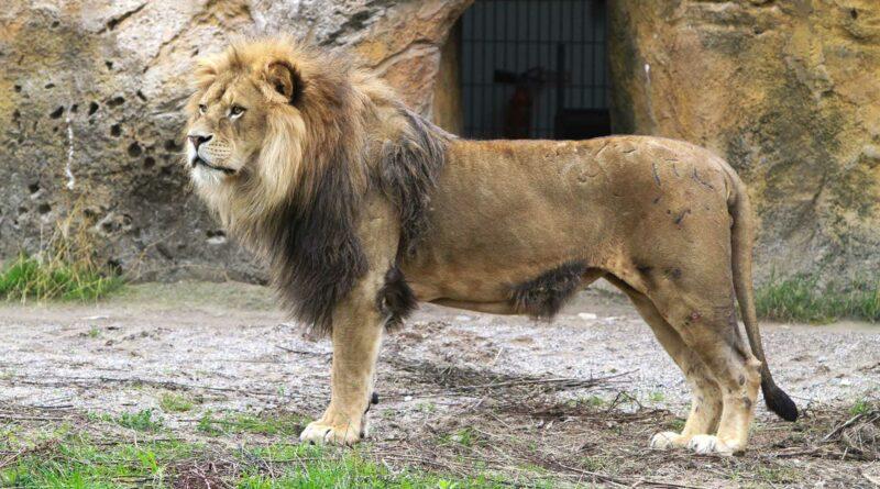 Credit: Grune Zoo Wuppertal/Newsflash